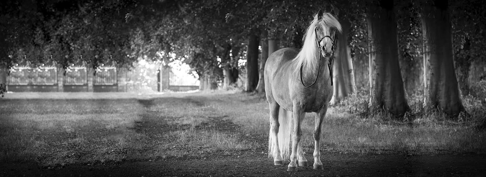 Striking equine photography